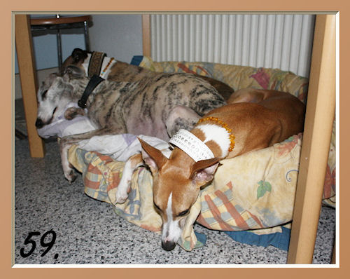 59 Buddy, Basko, Lennox