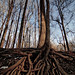 Rooted by AnyaLogic, on Flickr