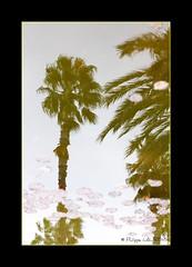Jardins de Majorelle. Reflets (philippelaurens) Tags: travel sunset vacation people blackandwhite bw sun white black france color nature water colors garden photo nikon europe flickr raw day pics tripod best fave explore maroc marrakech majorelle faves miroir reflets jardins shiningstar palmiers reflects planetearth maroco bestphoto theflickys 469 kartpostal flickrbest flickrplatinium d700 amazingshots flickraward flickrdiamond eperkeaward rubyaward beautifullshot nationalgéographic theperfectpinkdiamond nikonaward thelightpainterssociety championsflickr artofimages thedantecircle flickrstoday