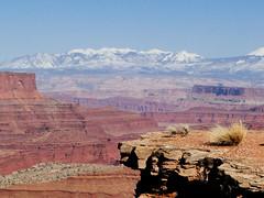 Canyonlands 01 (blevatech) Tags: utah sand desert deadhorsepoint moab redrock archesnationalpark raven canyons goodlight