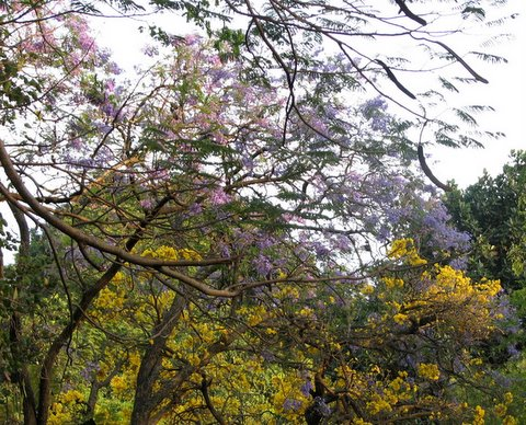 beauty of lalbagh as summer approaches