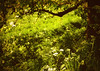 Apple tree (soleá) Tags: trees light holland green nature beauty dutch forest landscape photography photo europe flickr foto solea appletrees betuwe carmengonzalez anawesomeshot diamondclassphotographer flickrdiamond lushnature