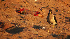 Nido de Carbn (KennoJC) Tags: beach playa basura seashore contaminacin huayquique garbageiquique