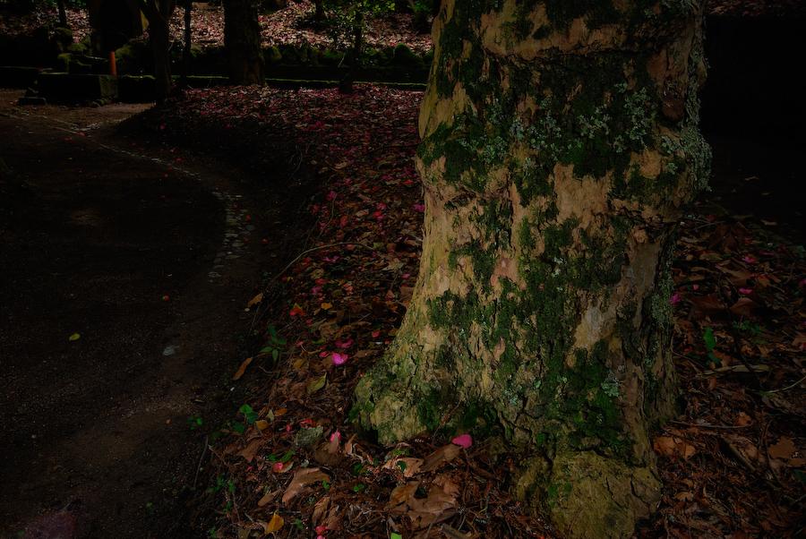 Árvore I
