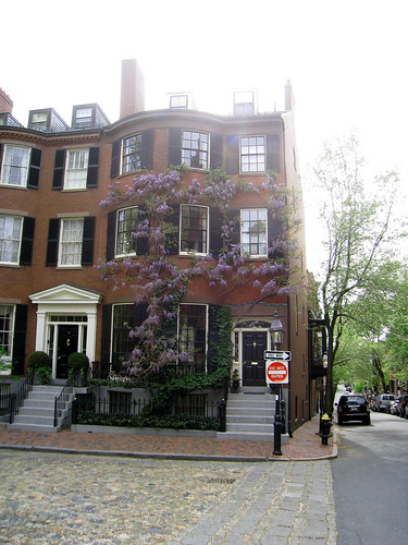 Beacon Hill Wisteria Climbing on House
