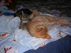 DSCN2442 (delilah84) Tags: cats animals chat felini animaux gatti animali gatte chattes