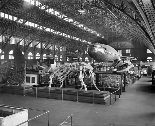 At the Louisiana Purchase Exposition in Saint Louis, Missouri, a view of the Natural History Fossil Exhibit with the model of a whale and skeletons of several dinosaurs | Smithsonian Intstitute