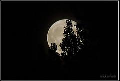 Moon Illusion: Howl at the moon (chickentinola) Tags: fullmoon moonillusion nikond40 nikkor15200vr