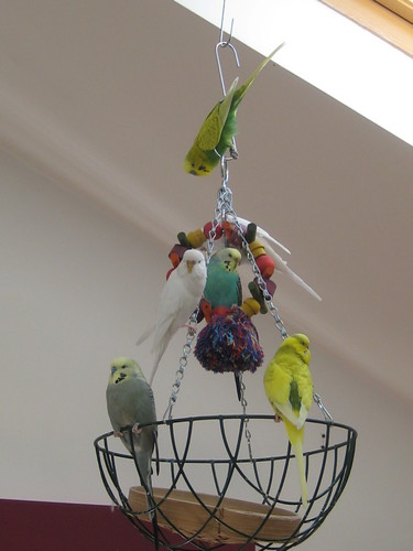 Budgie Outing