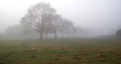 Foggy Morning (Thiru Murugan) Tags: morning trees winter cold grass fog landscape foggy australia victoria lazy hibernation coldest thiru