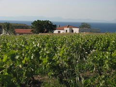 Bozcaada vineyard (bilyoblak) Tags: turkey bozcaada