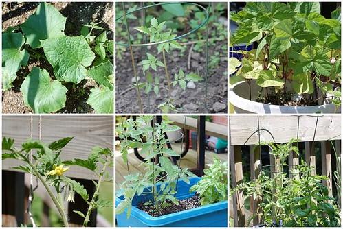 garden, july 7
