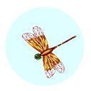 dragonfly (3doel82) Tags: fish bird animals insect gambar koleksi ikan belajar burung binatang carnivora serangga mamalia amphibi