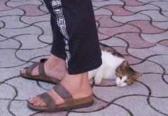 Riposo felino (alfiererosso) Tags: texture animals cat foot tiles gato pies gatto animali piedi mattonelle fube