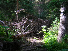 Deadfall Photo