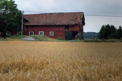 HDR Test (Kenny_lex) Tags: test barn geotagged pentax sweden rye tungelsta sverige haninge lada hdr photomatix ndesta rg k100dsuper k100ds ryeorwheat