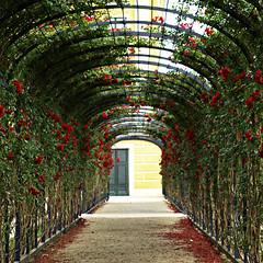 Red Roses  -  Schnbrunn (Elisa1963  nature art peace) Tags: schnbrunn vienna wien park red roses summer green austria sterreich soe laube  rosenlaube liederinbildern elisa1963
