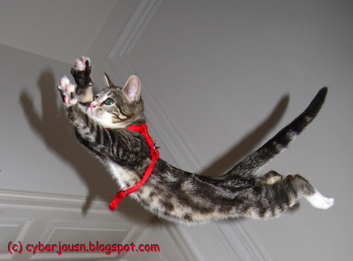 bibi flying cat
