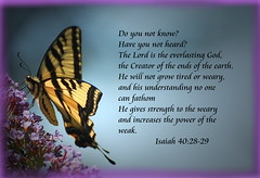 God Gives Strength to the Weary and Power to the Weak (honey 77) Tags: nature beautiful butterfly insect power god jesus christian strength isaiah creator inspirational weary weak scriptures bibleverse inspiks everlastinggod