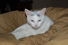 Gabbie (Suzie T) Tags: pink white cat grey gray bitchy
