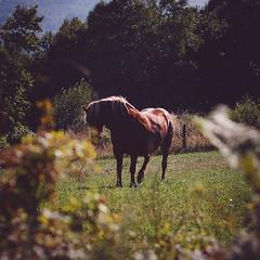 (Ana Cuba) Tags: horse caballo explore galicia voyeur lugo villalba vilalba corbelle