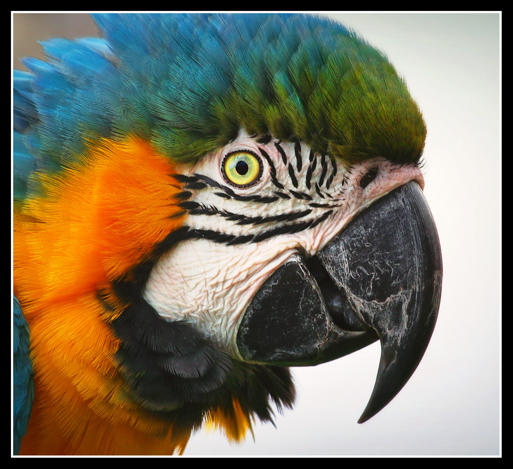 The World's Best Photos of colorphotoaward and loro ...