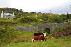 Skye - Elgol (Ulrike W.) Tags: skye scotland 2007 schottland elgol