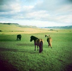 lost in iceland (+faster+) Tags: horses glass iceland holga xpro lomography crossprocess toycamera lofi slide dia 60mm ektachrome100 f8 islanda scanfromslide holgagcfn epsonv200 nolabprint