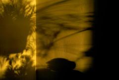 hoje à tarde nº 5... (bruce grant) Tags: luz geotagged casa sombras parede entardecer geo:lat=40036602 horadourada 20081207 geo:lon=75178121