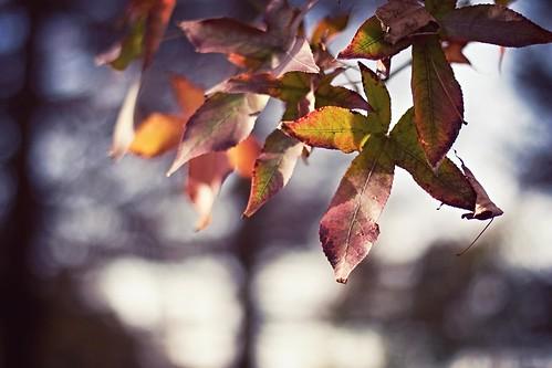 Autumn Naturey Crap