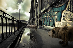 Bestial serie (Aur from Paris) Tags: urban paris france animals seine composition photoshop graffiti sheep lion fake surreal tags photomontage lamb unreal ruraldecay mouton decade marne chinagora charenton surraliste aur 5dmarkii masterpiecesoflightdark canoneos5dmkii