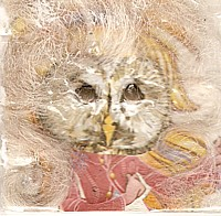 Owl a girl!