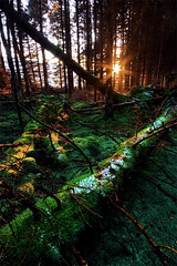 "Disentanglement (jasontheaker) Tags: uk trees winter sunset england snow forest moss frost angles westyorkshire wharfedale landscapephotography vibrancy ""jasontheaker"" ""valleyofdesolation"" ""boltonabby"" ""leadinglines"""