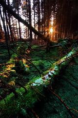 Disentanglement (jasontheaker) Tags: uk trees winter sunset england snow forest moss frost angles westyorkshire wharfedale landscapephotography vibrancy jasontheaker valleyofdesolation boltonabby leadinglines
