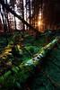 "Disentanglement (jasontheaker) Tags: uk trees winter sunset england snow forest moss frost angles westyorkshire wharfedale landscapephotography vibrancy ""jasontheaker"" ""valleyofdesolation"" ""boltonabby"" ""leadinglines"""