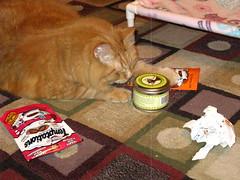Fresh catnip!