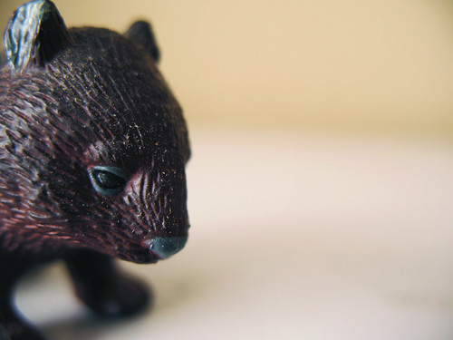 The Wombat Approaches:  December 25, 2008