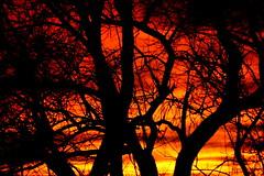 Sunday Sunset (MBH Pa) Tags: sunset sky orange nature colors landscape fantastic scenery vivid fabulous picturesque soe vividcolors naturesfinest blueribbonwinner bestlandscape golddragon mywinners fantasticlandscape platinumphoto aplusphoto ultimateshot citrit thatsclassy theperfectphotographer goldstaraward ilovemypics spiritofphotography spiritofphotograpy thebestscenery landscapedigitalphotography