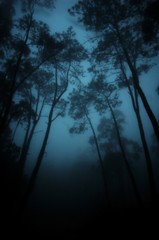 (t3mujin) Tags: d70 sintra portugal forest trees dark gloomy haunted fog cloudy winter woods grey mist sillouette shadow haze photographyrocks cotcmostfavorited building fav10 fav25 fav50 fav20 fav30 fav40 fav60