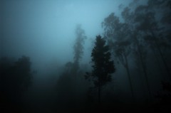 (t3mujin) Tags: d70 sintra portugal forest trees dark gloomy haunted fog cloudy winter woods grey mist sillouette shadow haze photographyrocks fav10 fav20