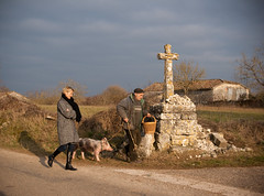 (-CyRiL-) Tags: lot cochon truffe midipyrénées lalbenque cavage cyrilbkl departementdulot