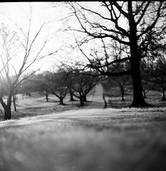 Winter (patrickjoust) Tags: park winter bw usa white black tree 120 6x6 tlr blancoynegro film america square lens prime us reflex focus flickr fuji conversion scanner united hill patrick twin maryland super baltimore scan reservoir v pro epson medium format druid states manual 500 80 joust ricoh biancoenero blancinegre estados 80mm f35 blancetnoir unidos ricohflex v500 160s anastigmat schwarzundweiss autaut lovelycity fragmentsofkantiandoctrine patrickjoust