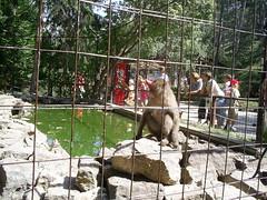 S4026113 (pappgabor) Tags: zoo veszprm 2007