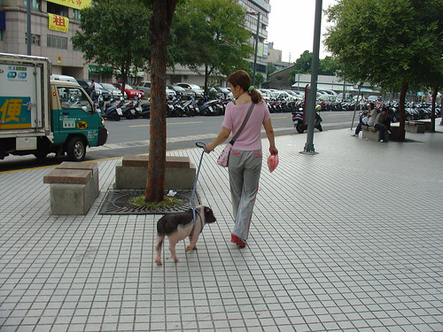 Woman Walks her Pet Pig Taiwan by amanderson2, on Flickr