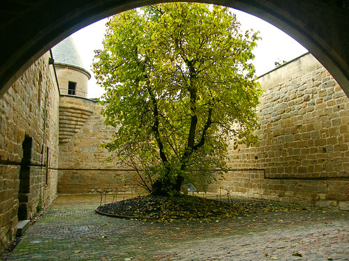 "Pati de la morera (Morus niger) en el castell d'Olite (""Patio de la morera"", ""Courtyard of the mulberry tree (Morus niger) in the Castle of Olite"") by Bilbopolit"