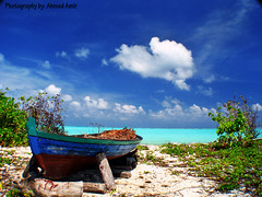 A beautiful scenary ( Ahmed Amir) Tags: travel sea vacation sun beach nature beautiful closeup canon landscape geotagged island photography photo interesting honeymoon day photos unique sony awesome best amir unclassified colourful maldives ahmed soe breathtaking smrgsbord naturesfinest wonderworld blueribbonwinner splendiferous supershot amazingtalent flickrsbest canonusers bej passionphotography abigfave platinumphoto anawesomeshot impressedbeauty superbmasterpiece flickrchallengegroup diamondclassphotographer flickrdiamond flickrchallengewinner amazingamateur uniquemaldives theunforgettablepictures colourartaward platinumheartaward iamsooofresh theperfectphotographer vosplusbellesphotos