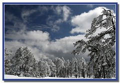 snowscape (Polis Poliviou) Tags: morning blue trees winter sky white mountain snow cold tree nature beautiful weather pine clouds forest canon wonderful landscape eos frozen photo flickr frost skiing cyprus pines snowboard february olympos snowglobe polis troodos nicosia naturesfinest supershot specland excellentscenic mediterraneanpines mediterraneanpine poliviou polispoliviou cypruspine troodospine