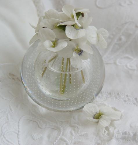 Witte Viooltjes