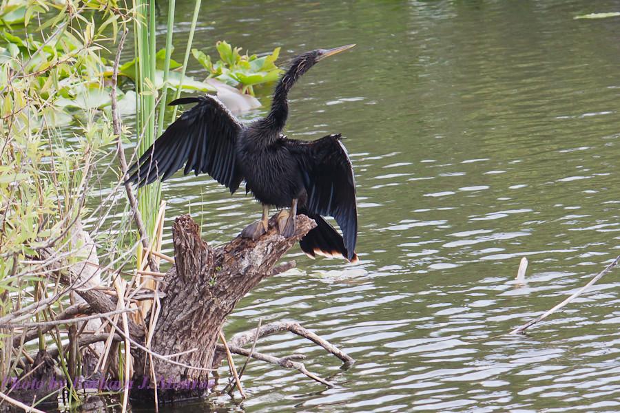 Everglades National Park (16 of 40)