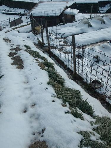 雪の大原 (57)